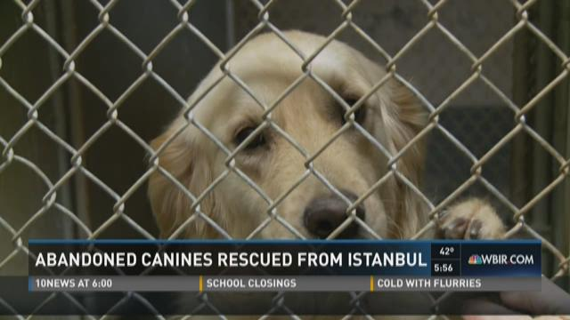 Dogs rescued from Turkey adjust to Tennessee