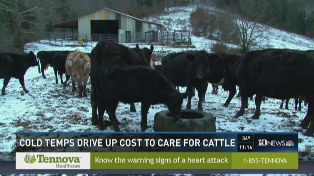 Cold temperatures drive up cost to care for cattle