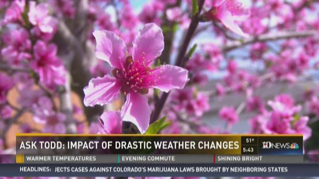 Ask Todd: the Impact of Drastic Weather Changes