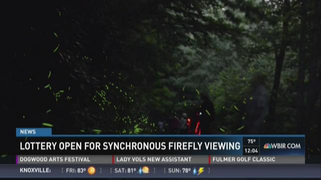 Lottery open for synchronous firefly viewing