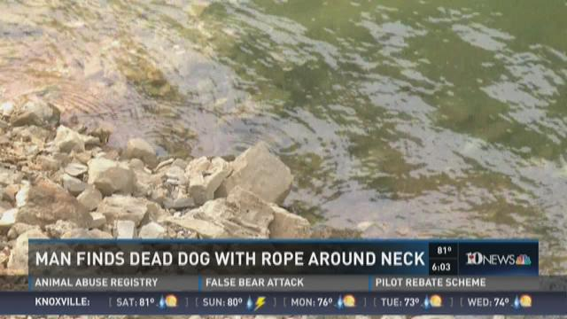 Man finds dead dog with rope around neck