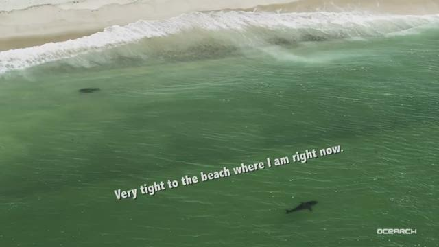 Video: OCEARCH team tags great white shark, Katharine, off Cape Cod
