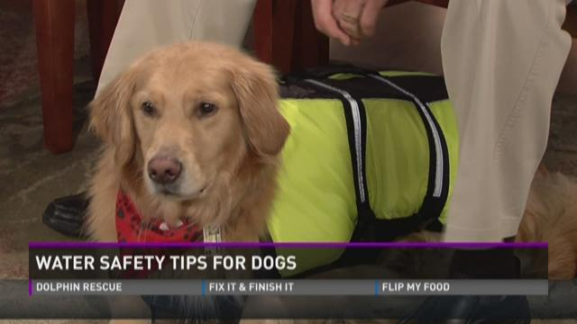 Water safety for dogs during the hot summer months