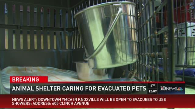 Animal shelter caring for evacuated pets