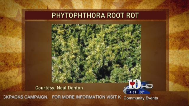 """Neal discusses Phytophthora or """"Root Rot"""""""
