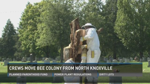 Crews move bee colony from North Knoxville