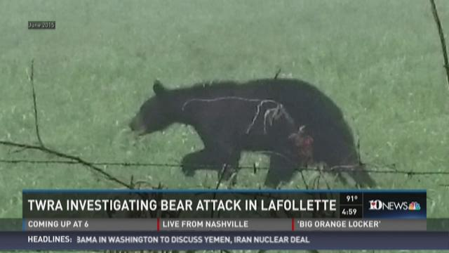 Man injured in possible bear attack