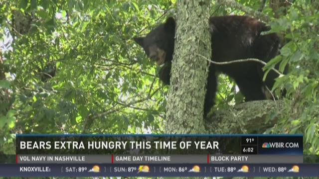 Bears extra hungry this time of the year