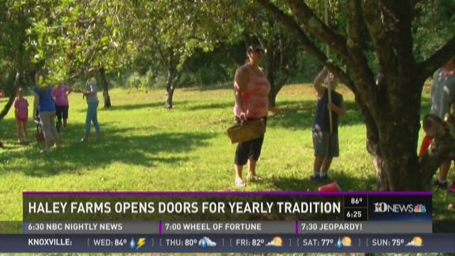 & And Finally: Haley Farm opens doors for apple picking tradition