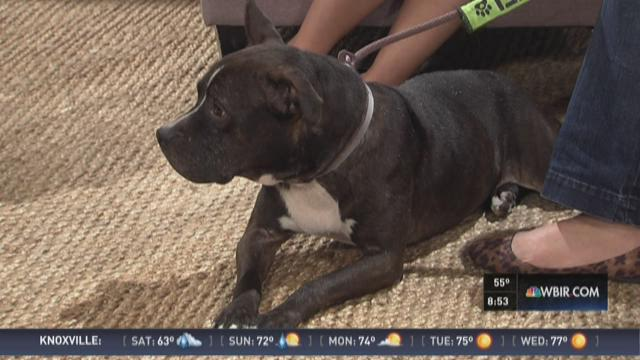 Pet of the Week - Pit Bill Awareness Month