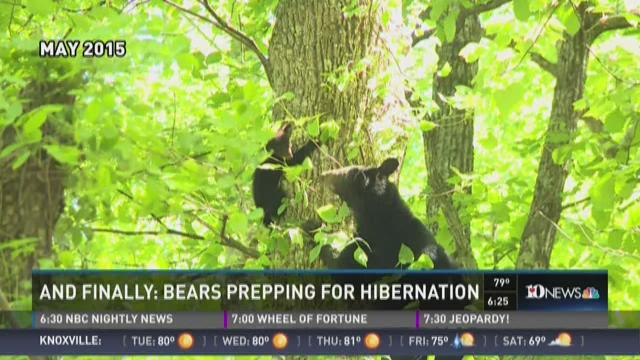 And Finally: Bears prepping for hibernation