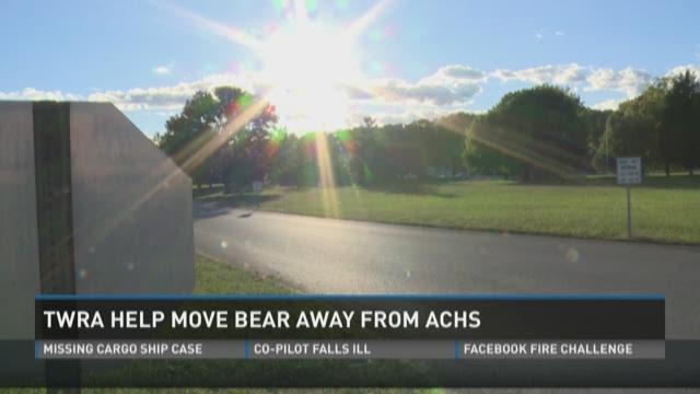 Bear at Anderson HS