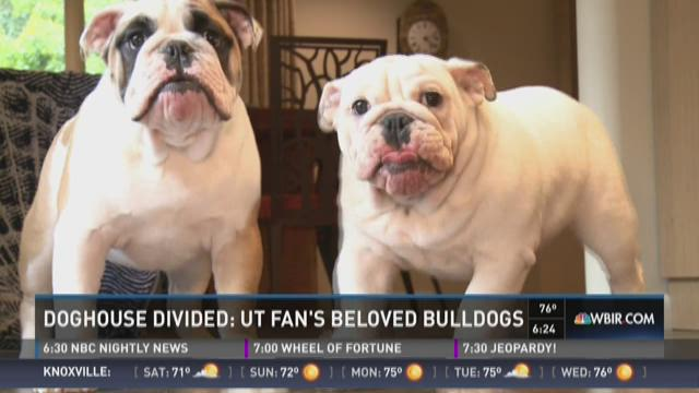 And Finally: UT Fan's beloved bulldogs